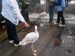 神戸市中央区・ポートアイランド 神戸花鳥園 フラミンゴ