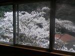 大阪府泉佐野市・天然温泉 犬鳴山温泉 山乃湯 休憩室から見た桜