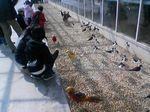 神戸市中央区・ポートアイランド 神戸花鳥園 中池