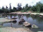八重山旅行記・2006年8月 石垣・波照間・西表・鳩間・小浜・竹富 休憩する由布島の水牛たち
