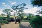 タンザニア・セレンゲティ・道を横切るゾウ