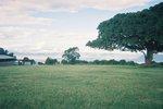 タンザニア・ンゴロンゴロのキャンプサイト