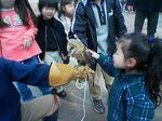 神戸市中央区・ポートアイランド 神戸花鳥園 メンフクロウ