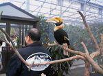 神戸市中央区・ポートアイランド 神戸花鳥園 オオサイチョウ