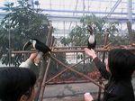 神戸市中央区・ポートアイランド 神戸花鳥園 オニオオハシ