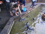 神戸市中央区・ポートアイランド 神戸花鳥園 ケープペンギン