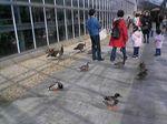 神戸市中央区・ポートアイランド 神戸花鳥園 中池1