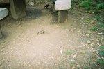タンザニア・セレンゲティ・ネズミ